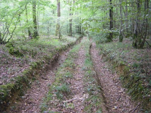 heuvel